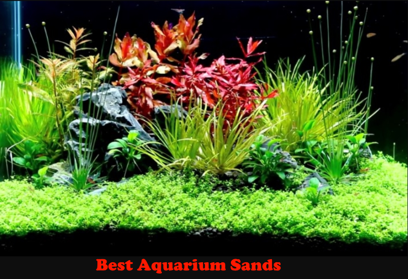 Best Aquarium Sands