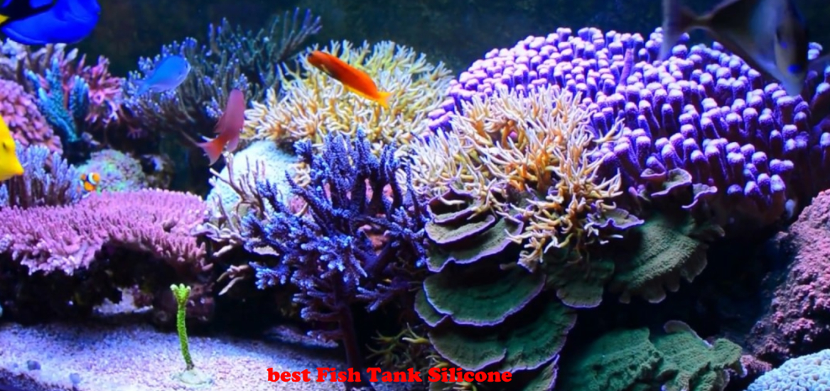 best Fish Tank Silicone